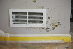 How to Effectively Remove Mold from Your Basement
