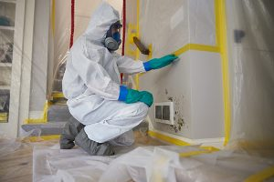 Mold Remediation - Kane, Kendall, and Will Counties