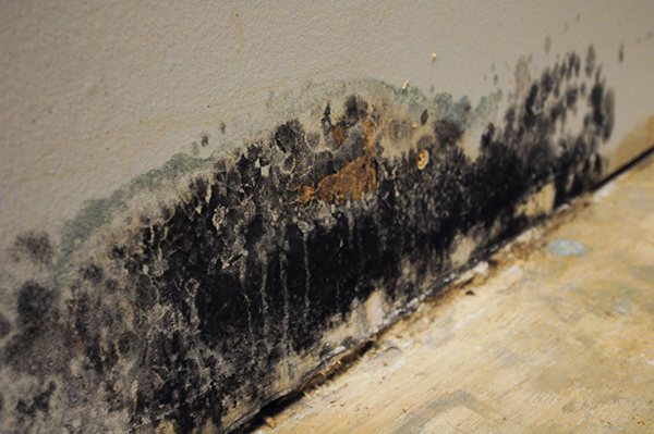 How Quickly Will Black Mold Appear After Water Damage in Chicagoland?