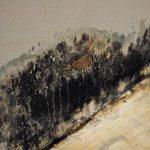 Mold Removal - Oswego, IL