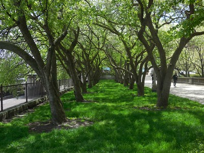 Top 10 Things to Do in the Spring in Illinois